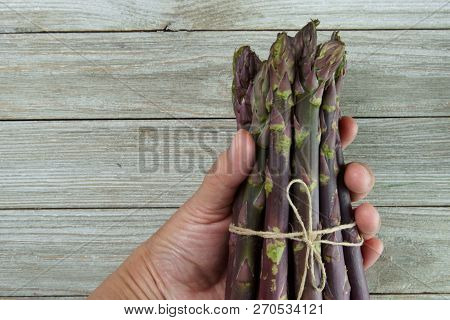 Purple Asparagus In A Bunch In A Hand On A Wooden Background.