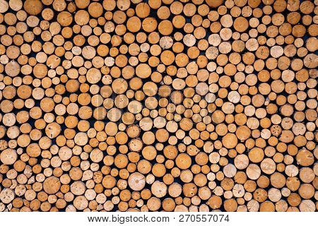 Round Wooden Stumps Background,trees Cut Section For Background Texture