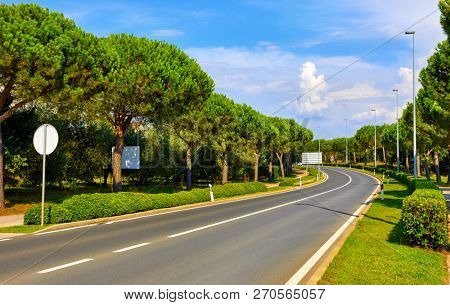 Croatia. Asphalt highway road among conifer trees and green bushes, shorn grass at lawns. Sunny day with blue sky.