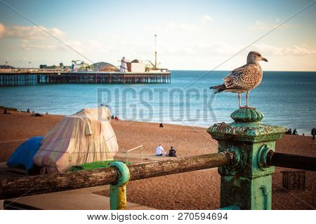Beach View Of Brighton Pier The Nature Public Place With Breakwater Rock, People, Bird And Brighton