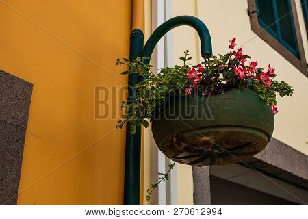 View Of Beautiful Madeira Traditional Flower Baskets.