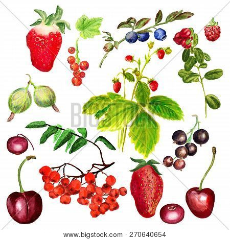 Set Of Watercolor Image Of Garden And Wild Forest Berries On White Backgound. Cowberry, Blueberry, C