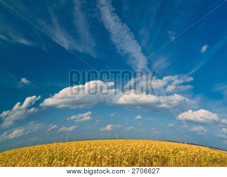 Spherical Meadow