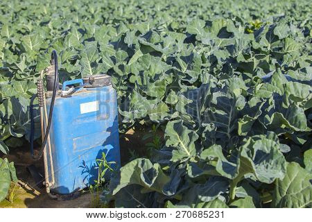 Backpack Fumigation Sprayer At Brocoli Field. Pest Control Concept