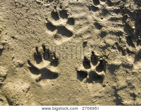 Traces of a dog on soft clay poster