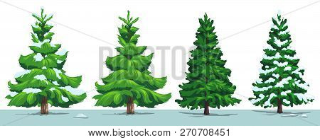 Christmas Tree With Snow. Vector Green Pine, Fir And Spruce Trees With Snowy Branches In Winter Fore