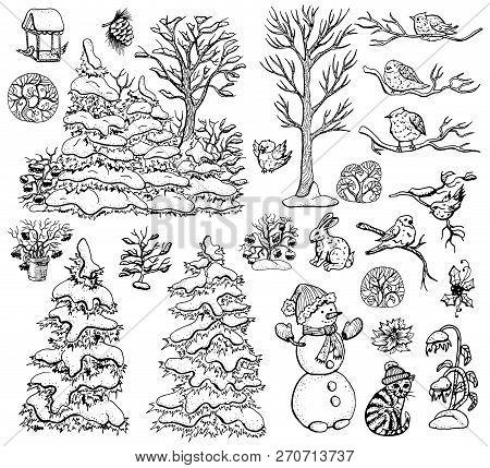 Vector Design Set With Nature Elements, Fir Tree, Conifer, Berry Bushes, Birds, Poinsettia, Snowman