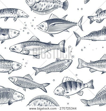 Sketch Fishes Seamless Pattern. Etched Ocean Fish Wrapper Vector Vintage Background. Fish Sea And Oc