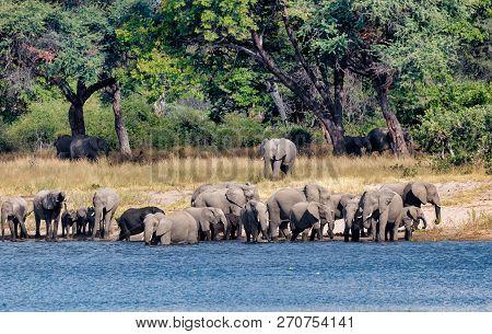 Herd Of African Elephant With Babies, Loxodonta On Waterhole In Bwabwata, Caprivi Strip Game Park, N