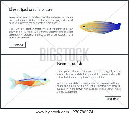 Blue Striped Tamarin Wrasse Posters Set With Titles And Buttons. Neon Tetra Fish Biodiversity Of Tro