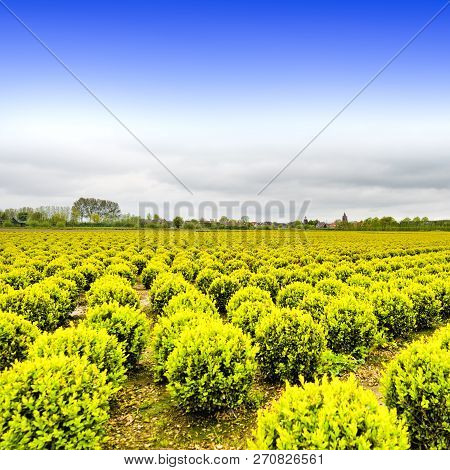 Agriculture On Land Reclaimed From The See In Netherlands. Rows Of Plant On The Land Formed By Dams