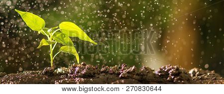 Close Up Of Young Tree On Soil With Water Drop Effect. Growing Seed And Planting Concept, Banner Wit