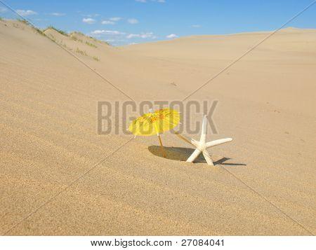 Hvězdice na písčité pláži