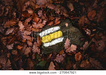 Yellow Tourist Sign  On The Rock Between The Brown  Leafs In The Forest At Fall.  Tourist Marking In