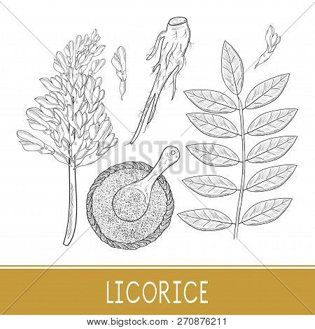 Licorice. Root, Flower, Leaves, Basket, Spoon, Powder. On A White Background. Sketch. Monochrome. Se