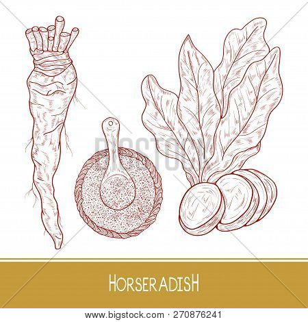 Horseradish. Sketch. Root, Leaves. Monochrome. Set. On A White Background.