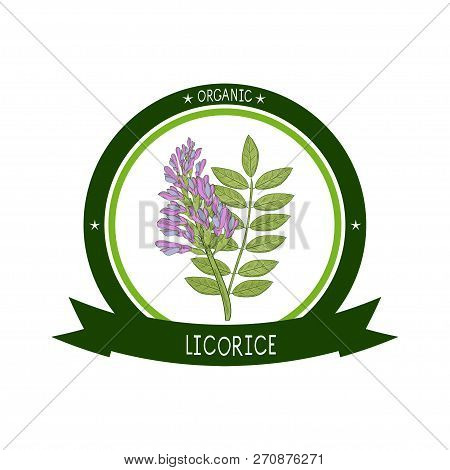 Licorice. Flower, Leaves. On A White Background. Sketch. Logo, Sticker, Emblem