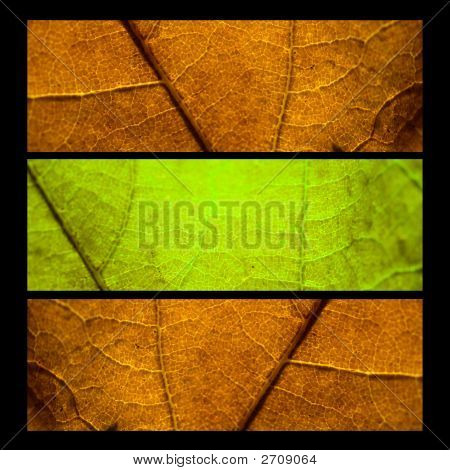 Collage With Three Mapple Leafs - Autumn Concept
