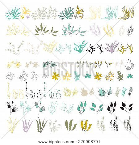 Vector Set Of Hand Drawn Seaweeds And Corals. Isolated Individual Objects, Algae. Sea Clipart For Gr