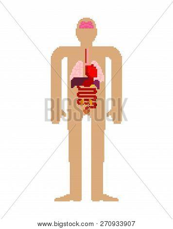 Internal Organ Pixel Art Set. 8 Bit Anatomy Of Human Body. Heart And Brain. Liver And Stomach. Esoph