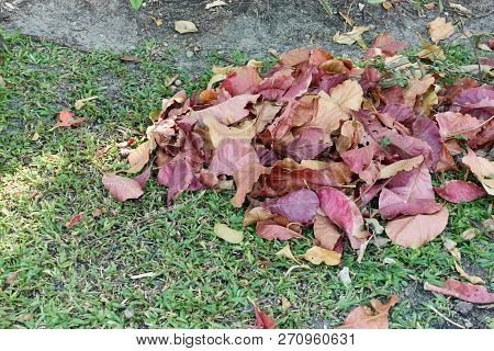 Close Up Pile Colorful Dry Leaves On Grass In Garden