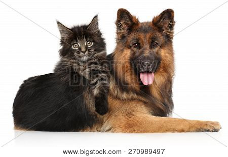 Cat With Dog Together, Maine-coon Kitten Posing Riding A German Shepherd On White Background. Animal