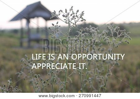 Inspirational Motivational Quote-life Is An Opportunity. Appreciate It. With Wild Grass Flower Ready