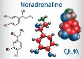 Noradrenaline (NA, norepinephrine , NE )  molecule .  It is a hormone and neurotransmitter. Structural chemical formula and molecule model. Vector illustration poster