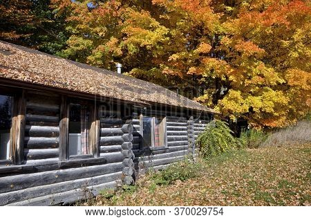 King City, Ontario / Canada - 10/17/2008: Old Wooden Log House Exterior With Maple Trees Forest, Kin