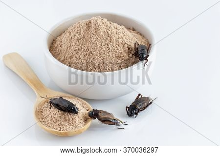 Cricket Powder Insect And Pile Gryllus Bimaculatus For Eating As Food Items Made Of Insect Meat In B
