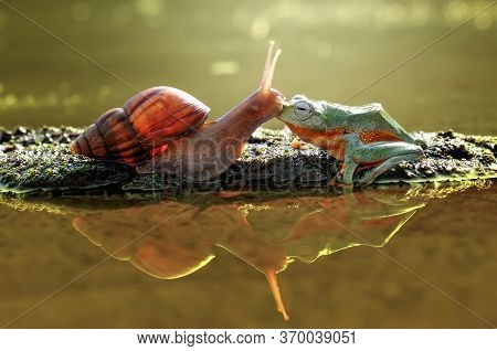 Snail And Flying Frog On The Water
