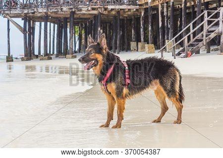 The Dog On The Beach In Tanzania