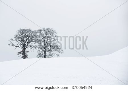 Two Leafless Trees In Winter Landscape In Bavaria, Germany