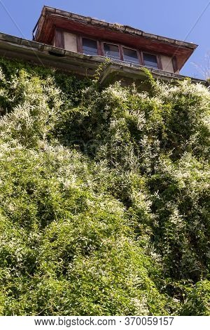 Abandoned Old House Overgrown With Vegetation And Ivy On A Hill Against A Blue Sky. Bottom View