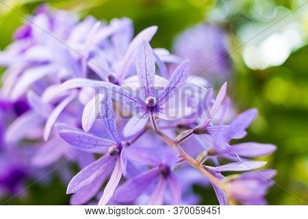 Beautiful Purple Wreath Vine (petrea Volubilis) Or Queen's Wreath Vine Flower On Blurred Background