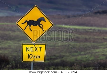 Road Sign Warning The Traffic About The Wild Horses - S O Called Brumbies - In The Snowy Mountains I
