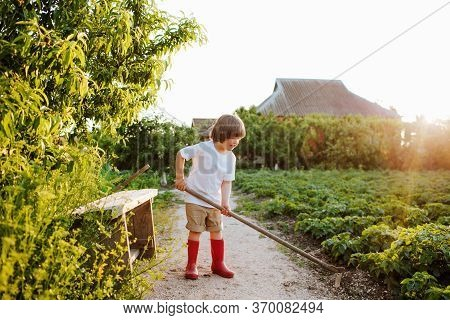 Cute Little Boy In Red Rubber Boots Works With A Hoe On Beds In A Garden. Copy Space