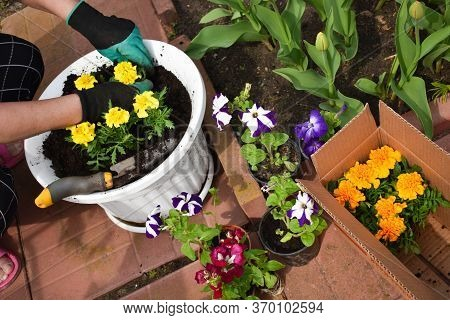 Gardening And Horticulture. Spring Work In The Garden. Growing Flowers. Flower Plants In The Garden.