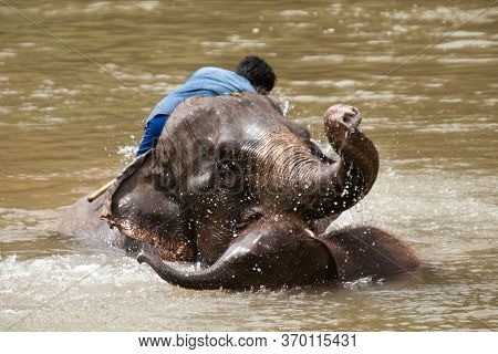 Mother Elephant And Baby Elephant Bathing In The River,elephant Conservation Concept