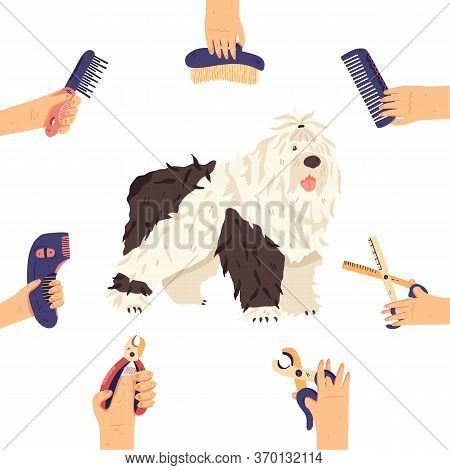 Bobtail And Groomers Hands With Grooming Tools Around. Fun Long Fur Dog Breed Flat Vector Illustrati
