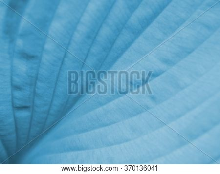 Light Blue Tinted Floral Background. Wide Leaf Of A Plant Close-up. Horizontal Backdrop Or Wallpaper