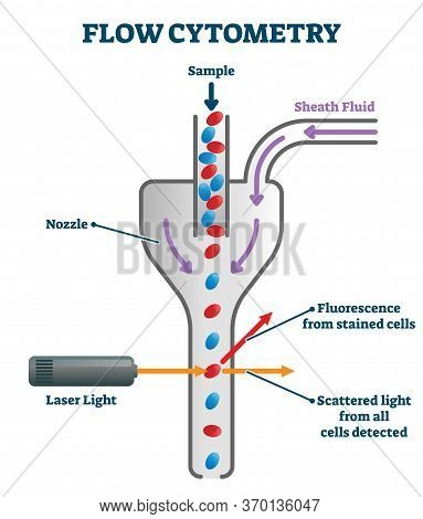 Flow Cytometry Vector Illustration. Labeled Measurement Instrument Explanation Scheme And Process Ex