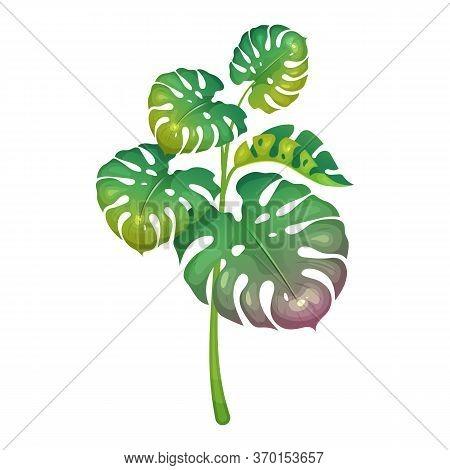 Jungle Vegetation Cartoon Vector Illustration. Decorative Monstera Leaves. Subtropical Fern. South W