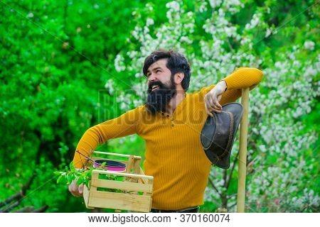 Work In Garden. Farmer Hold Box. Bearded Man Preparing To Planting. Eco Farm. Farm. Bearded Gardener