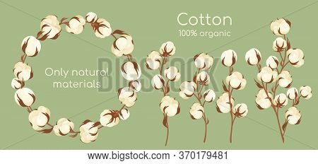 Organic Cotton Plant Vector Illustration Set. Cartoon Flat Cottonseed Branch With White Textured Flo