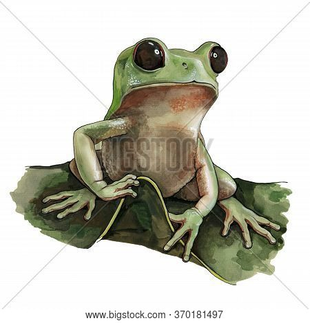 Green Frog Watercolor Illustration. Hand Drawn Wild Small Forest Amphibian Sitting On A Green Leaf.