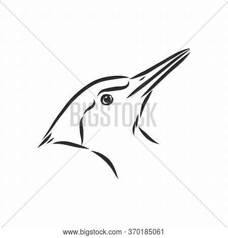 Isolated Vector Illustration. Hand Drawn Linear Ink Sketch Of A Woodpecker Bird. Woodpecker Bird, Ve
