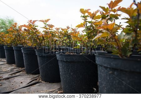 Many Different Young Plants In Pots In A Nursery Garden