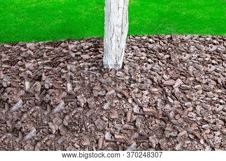 Mulching With Bark In A Garden With A Whitewashed Tree Trunk, Closeup Of A Pile Of Bark Shavings On