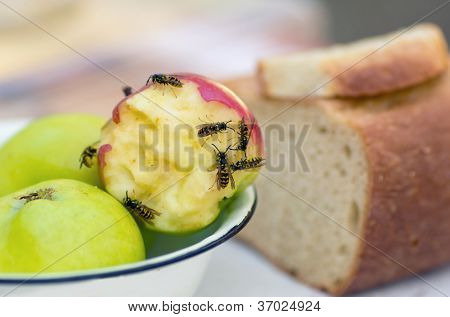 Macro of wasps eating an apple